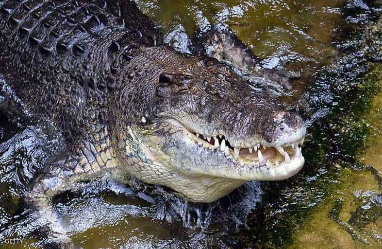 ظنوا أن تمساحا قتله.. فاكتشفوا السبب الصادم