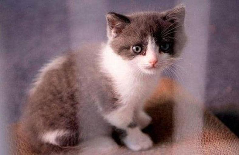 عقوبة قاسية لقاتل قطة