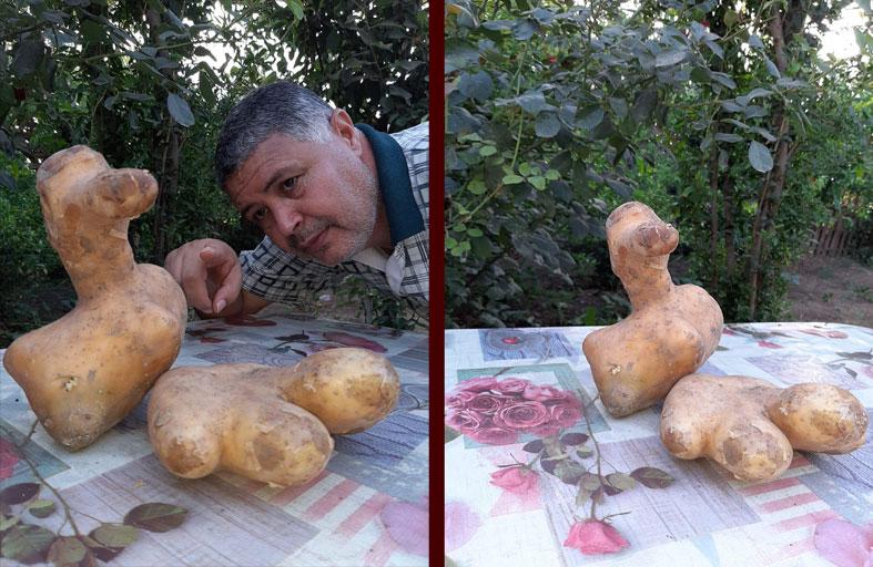 ثمرة بطاطس على هئية كف إنسان وأخرى على هيئة بطة