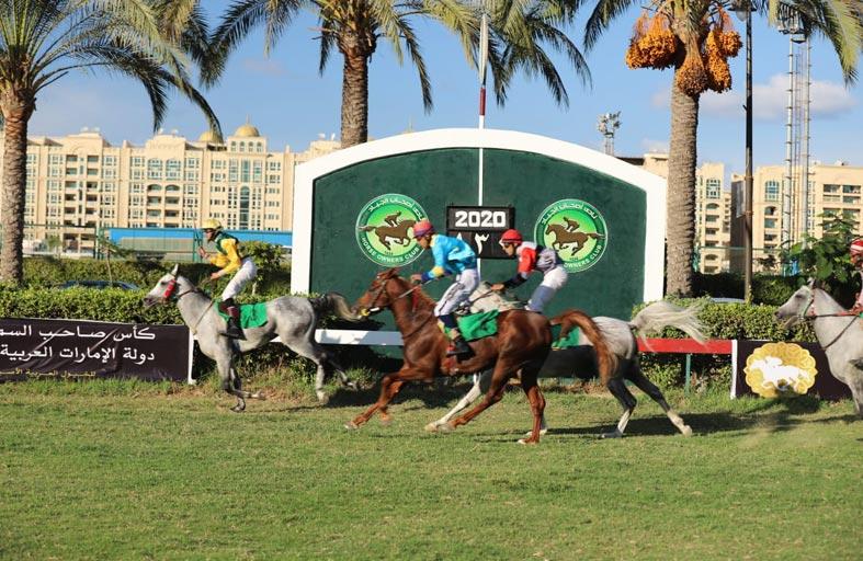 الجواد «جوهر سعفان» بطلا لكأس رئيس الدولة للخيول العربية الأصيلة في مصر