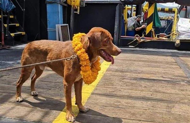 كلب سبح 220 كيلومترا قبل إنقاذه