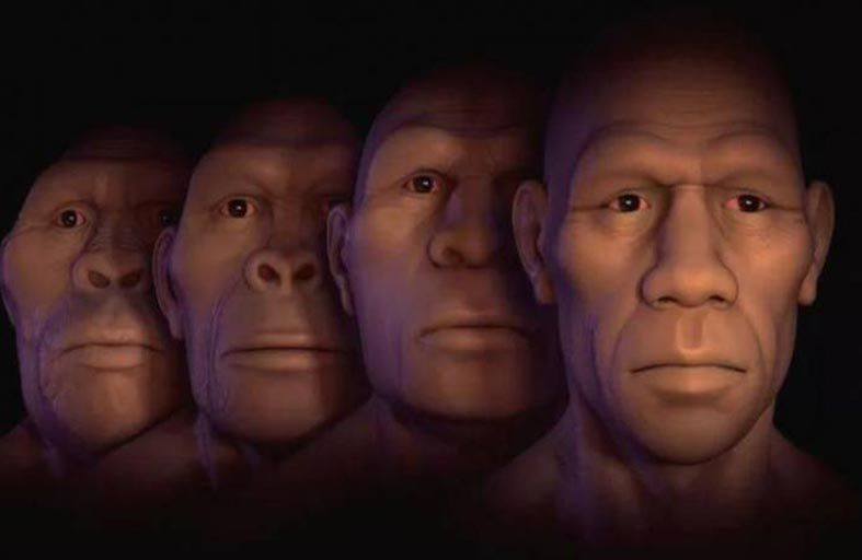 لماذا تقلص وجه الإنسان؟