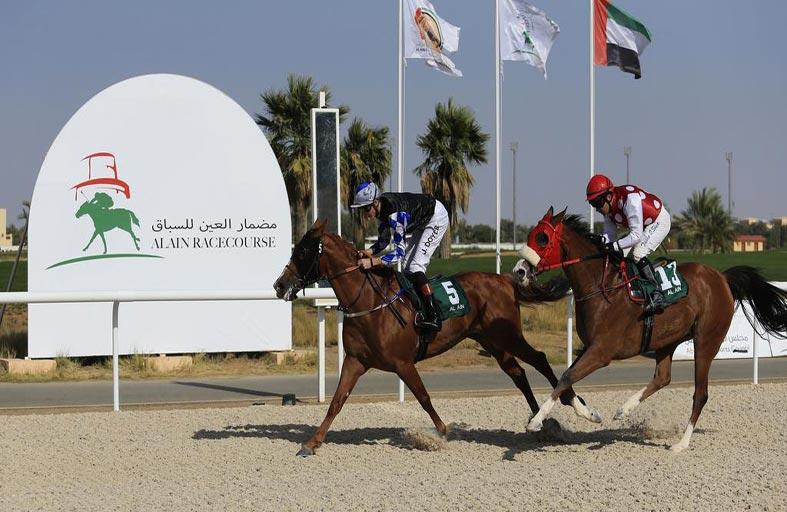 اللجنة المنظمة : مضمار نادي العين للفروسية جاهز لانطلاقة الموسم الجديد لسباقات الخيول