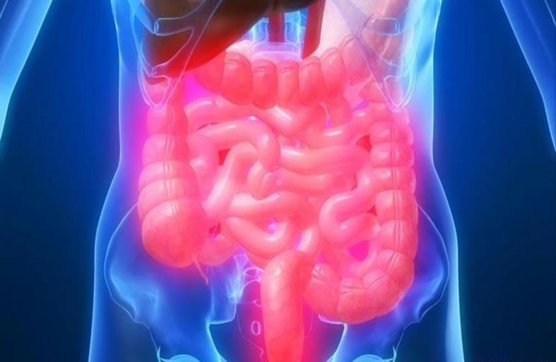 علاج بكتريا الامعاء يخفض عوامل الخطر القلبية