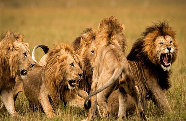 دراسة توضح الخطر الداهم على الحيوانات