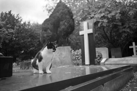 قط يزور قبر صاحبه يوميا