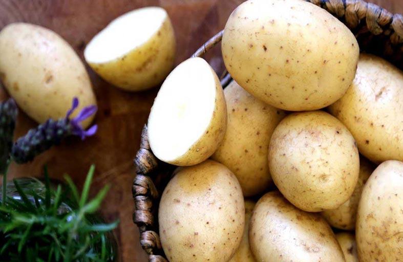 فوائد البطاطا المسلوقة للأطفال