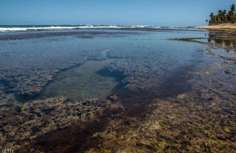 تلوث أجمل شواطئ البرازيل.. و السبب مجهول