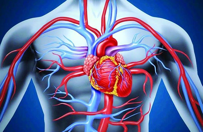 الكوليسترول المنخفض يصيب النساء بـالسكتة الدماغية