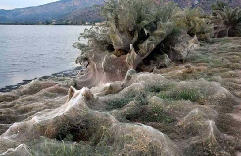 تزاوج لعناكب يحول بحيرة لقبو مهجور