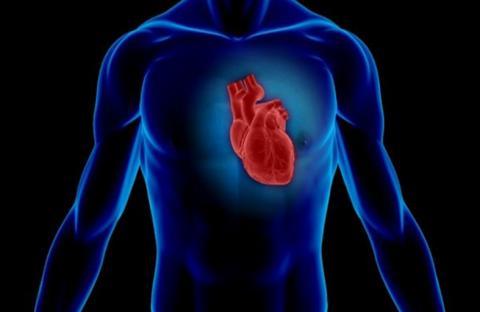 حماية القلب تبدأ بحماية الكلى!