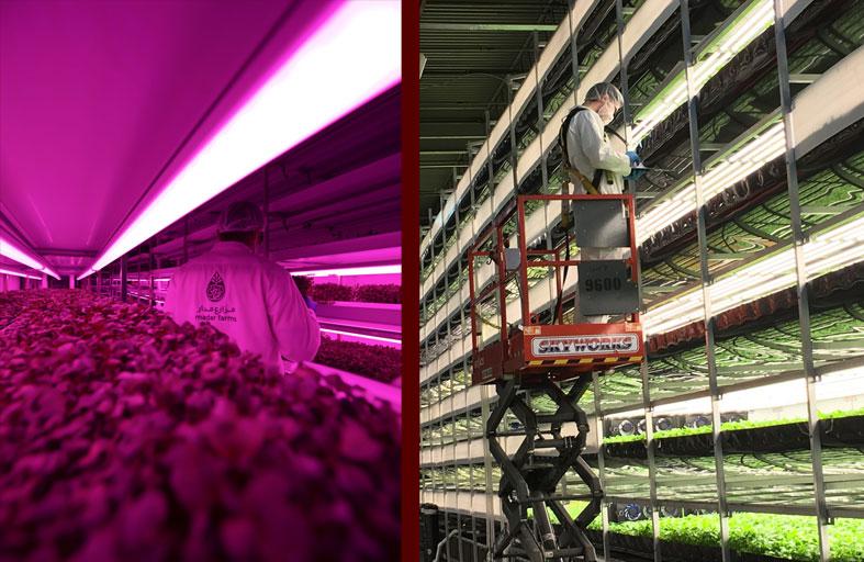 «مكتب أبوظبي للاستثمار» يستثمر 367 مليون درهم في أربع شركات متخصصة بالتقنيات الزراعية لتنمية القطاع في الإمارة