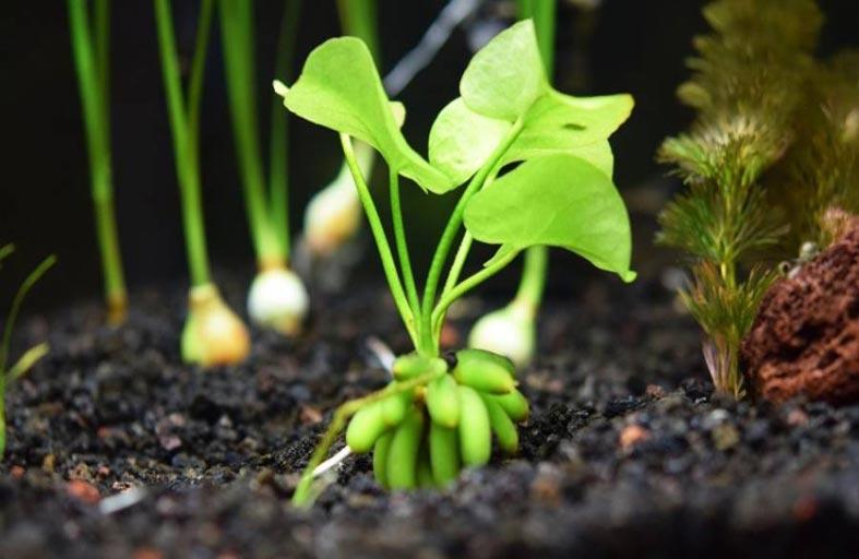 النباتات تعاني من الاضطراب أيضاً بسبب التوقيت