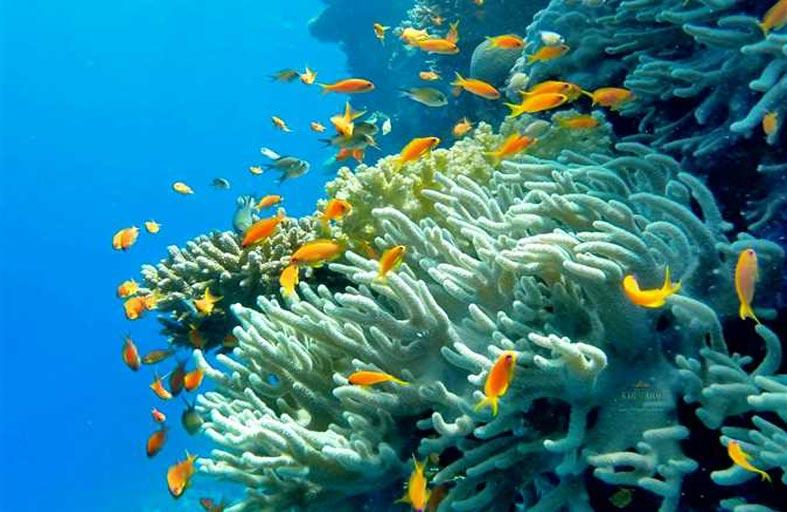 دراسة جديدة تظهر العلاقة بين انخفاض مستوى التنوع البيولوجي لأسماك الشعاب المرجانية وارتفاع درجات الحرارة