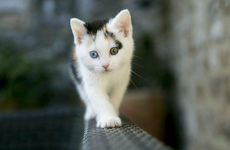 تحذير علمي صارم: لا تخرج قطك من البيت