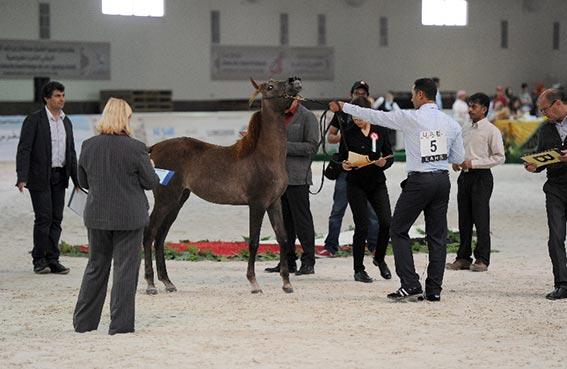 مهرجان سلطان بن زايد الدولي التاسع  للفروسية في بوذيب اليوم