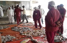 بلدية رأس الخيمة تطور سوق رأس الخيمة للأسماك