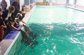فندق يوظف الدلافين لعلاج الأطفال