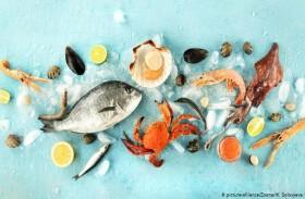 تعرف على أصناف السمك المناسبة للأطفال؟