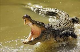 ينجو بأعجوبة من فكي تمساح