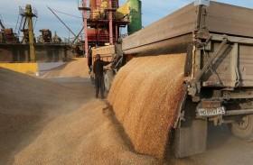 مصر: احتياطي القمح يكفي حتى فبراير