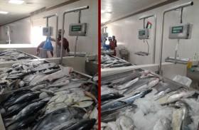 بلدية رأس الخيمة تنجز تطوير سوق رأس الخيمة للأسماك