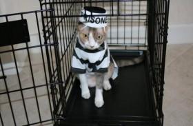 فرار قطة متهمة بتهريب المخدرات