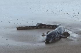 كائن بحري غريب على شاطئ
