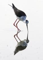 طائر اللقلق يشرب من المياه في مركز راكونيجي، بالقرب من كونيو، شمال غرب إيطاليا. (أ ف ب)
