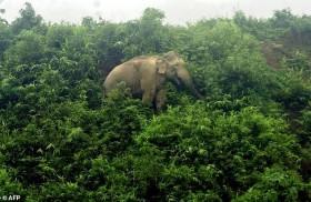 فيلة تهاجم لاجئين وتقتل اثنين