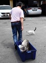قطة تمشي بالقرب من رجل ينقل سمكة اصطادها الصيادون في قرية بولاو بيتونج في بينانغ بماليزيا. (ا ف ب)