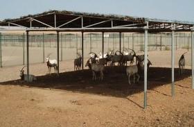 «مساندة» تنجز إنشاء وصيانة مرافق «مركز الدليجة لإدارة الحياة البرية»