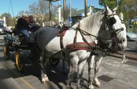 عربات الخيول توصل الوجبات للمسنين