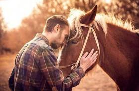 اكتشاف طريقة تفاعل الحصان مع الإنسان