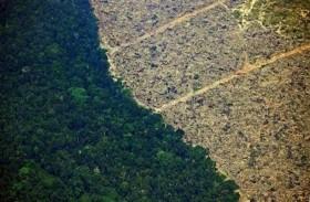 إزالة 1600 كم مربع من أحراج الأمازون