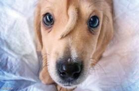 كلب بـ«ذيل» على وجهه