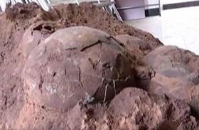 عثروا على ببيض عمره 145 مليون سنة
