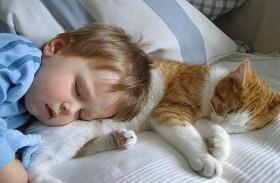 علاقة الموت المفاجىء للأطفال بالقطط؟