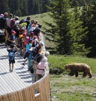 زوار ينظرون إلى الدب نابا في محمية أروسا بارنلاند في منتجع أروسا الجبلي، سويسرا.  رويترز