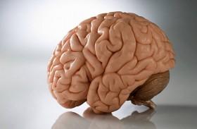 دماغ الإنسان لا يموت مع صاحبه