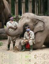 حارسان يرتديان أقنعة واقية، ويجلس أحدهما على قدم فيل في حديقة حيوان سايغون والحدائق النباتية ، والتي تواجه أعدادًا متضائلة من الزوار بسبب فيروس كورونا، في هوشي منه ، فيتنام.  رويترز