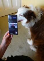 جين تتحدث إلى طبيب بيطري عبر مكالمة فيديو عن كلبها هاري مع استمرار انتشار فيروس كورونا في بريطانيا. رويترز