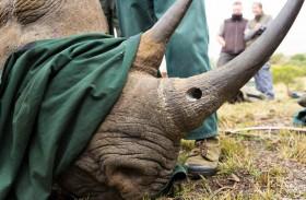 ضبط شحنة من قرون وحيد القرن
