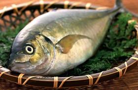 السمك ينتشي بالمخدرات