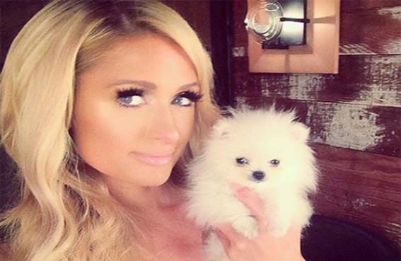 هيلتون تشتري كلباً بـ 13 ألف دولار