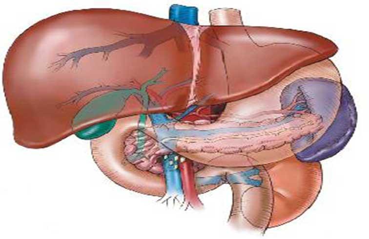 أكياس الكبد تصيب  5 بالمائة من البشر