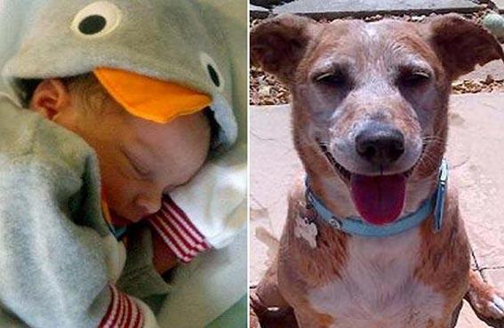 كلب أليف يقتل طفلاً