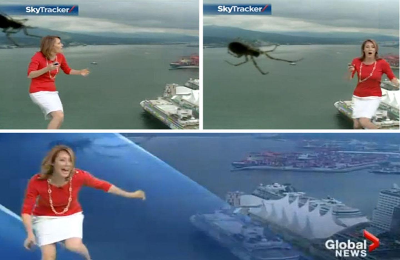 عنكبوت يحرج مذيعة على الهواء