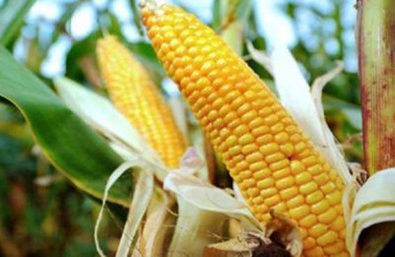 يعترف بسرقة أسرار الذرة الأمريكية